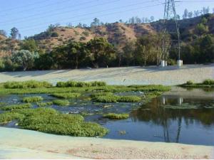 LA River Successive Ecology
